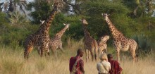 Un pays parfait pour un safari sur safarivo.com